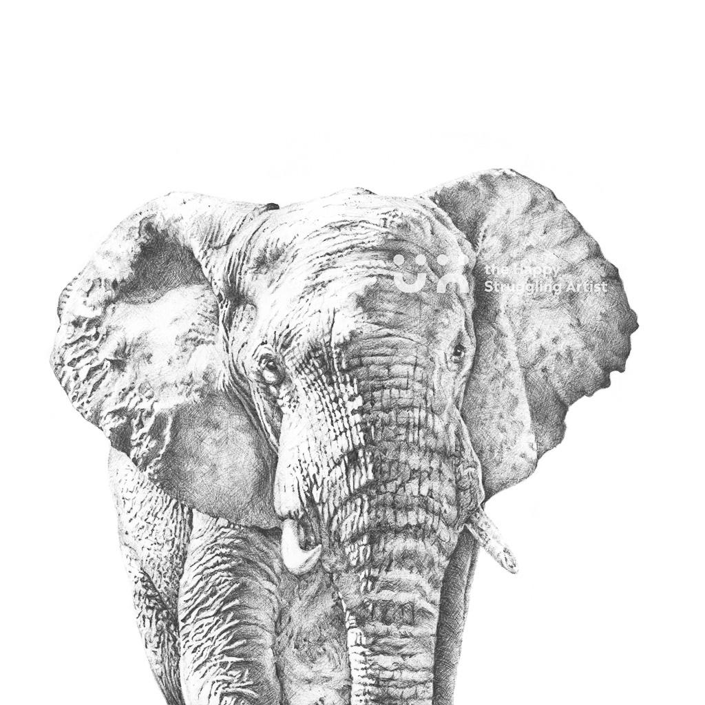 Fine Art Print - Gentle Giant - Elephant