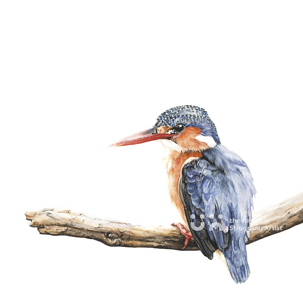Fine Art Print - The Waiting Game - Kingfisher