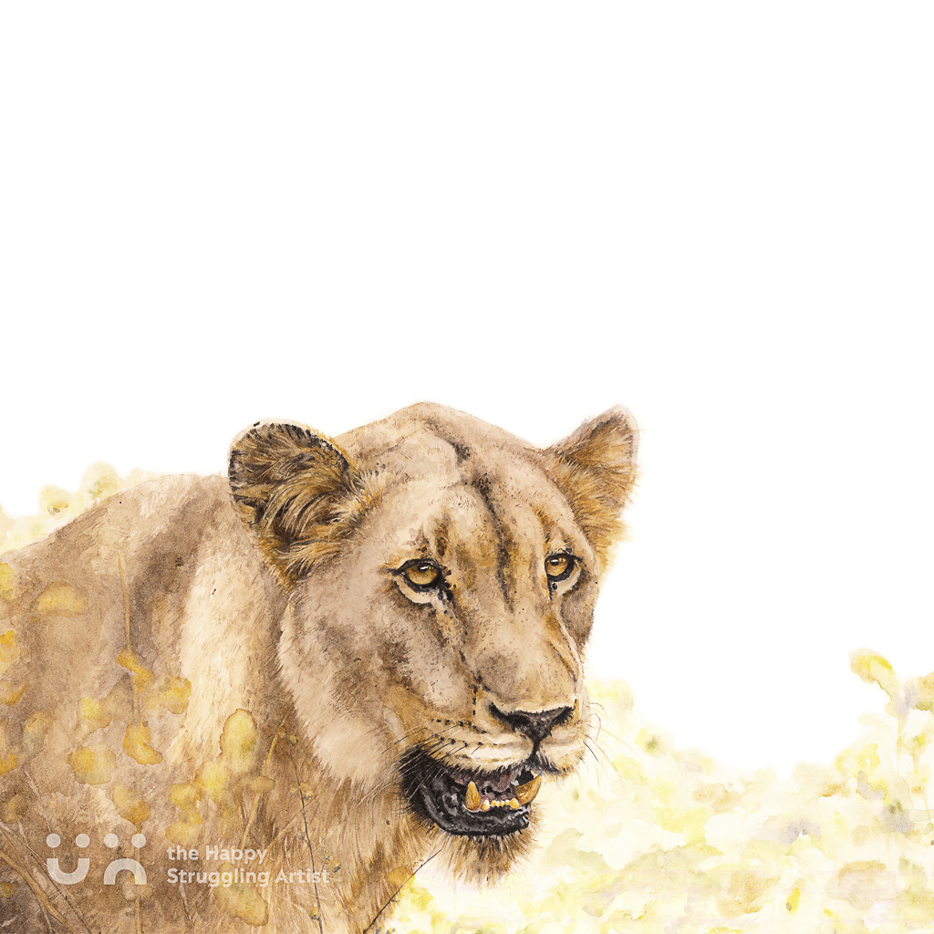 Fine Art Print - Focus - Lion