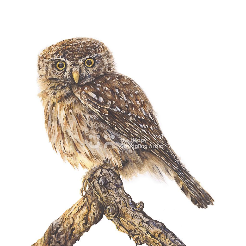 Fine Art Print - Awake - Owl