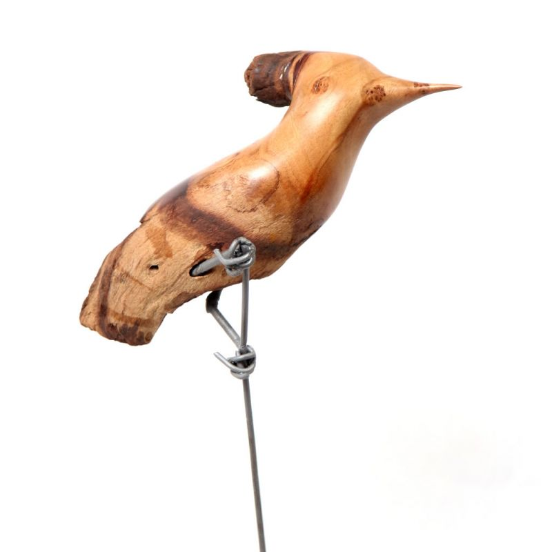 Bird - Hoopoe in Mopane Wood - Small