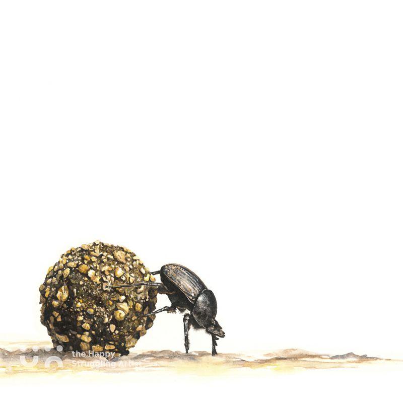 Fine Art Print - Padkos - Dung Beetle