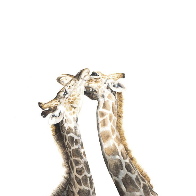 Fine Art Print - Necking 2 - Giraffes