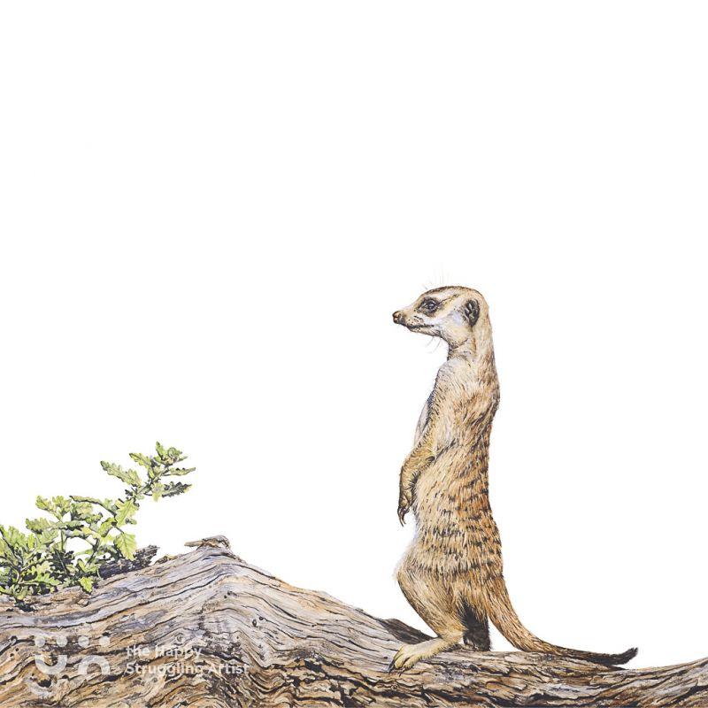 Fine Art Print - Lookout - Meerkat