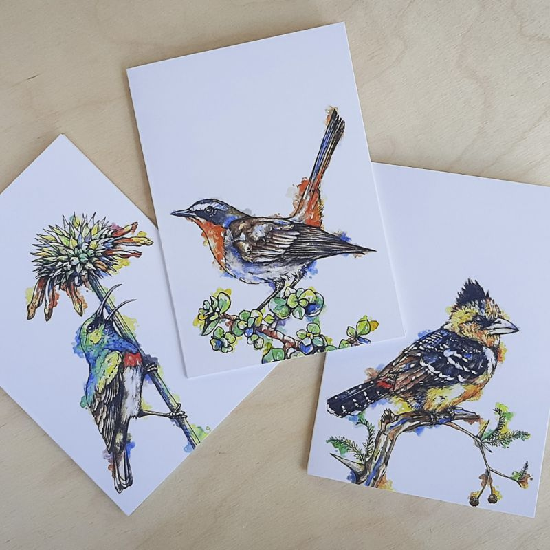 South African Birds - Greeting Cards - A6 set of 3